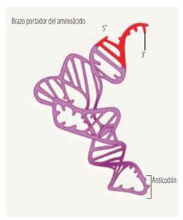 acidos_nucleicos_16.jpg (257×308)