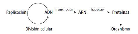 acidos_nucleicos_17.jpg (471×116)