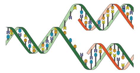acidos_nucleicos_18.jpg (472×246)