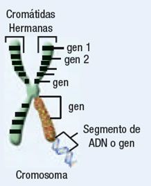 acidos_nucleicos_19.jpg (218×269)