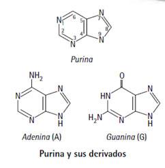 acidos_nucleicos_3.jpg (242×246)