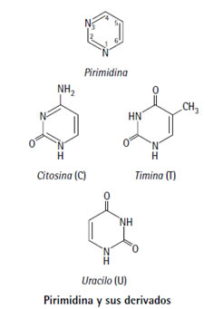 acidos_nucleicos_4.jpg (236×341)