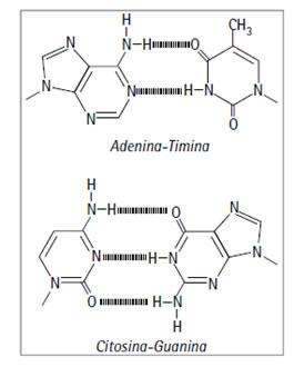 acidos_nucleicos_8.jpg (265×348)