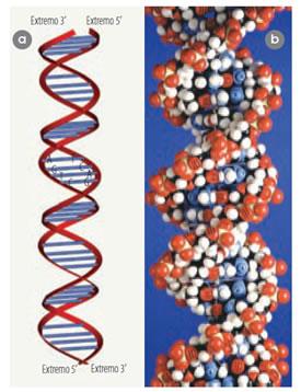acidos_nucleicos_9.jpg (275×358)