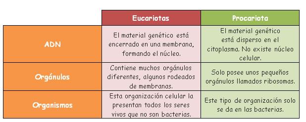 Cuadro comparativo: eucarionte y procarionte