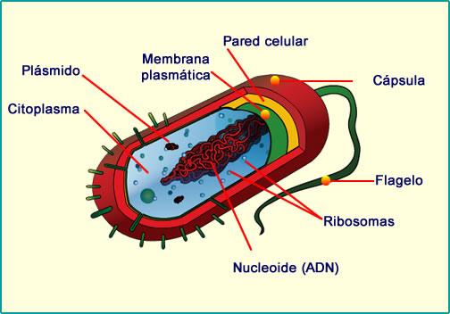 Células procariontes