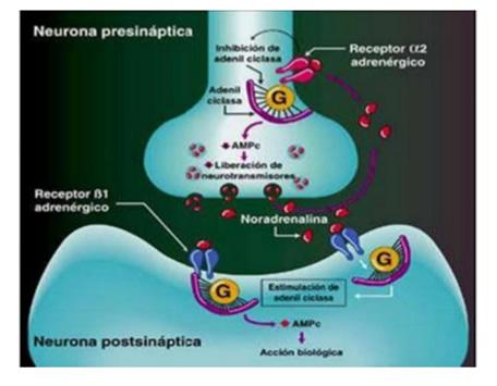 drogas_sistema_nervioso_3.jpg (456×355)