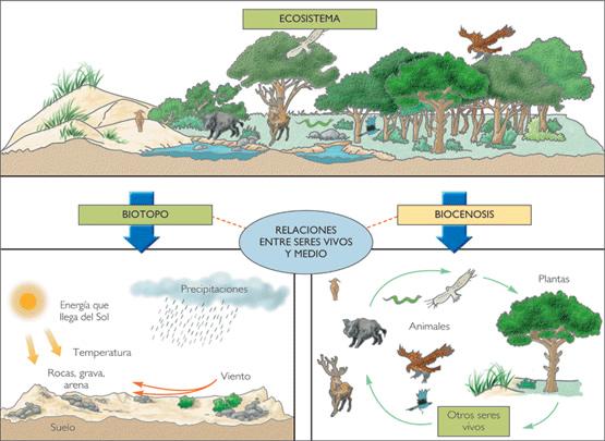 qué es un ecosistema