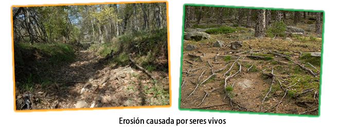 Erosión biológica