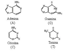 experimentos_DNA_2.jpg (273×224)