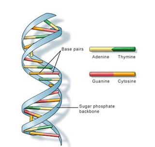 experimentos_DNA_3.jpg (320×303)