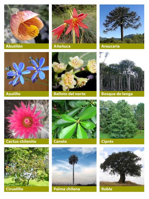 Flora Chilena