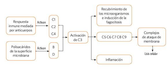 mecanismos_accion_defensa_4.jpg (578×241)