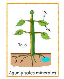 Cómo se nutren las plantas