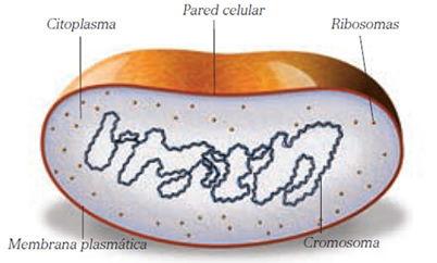 organismos_patogenos_1.jpg (402×242)