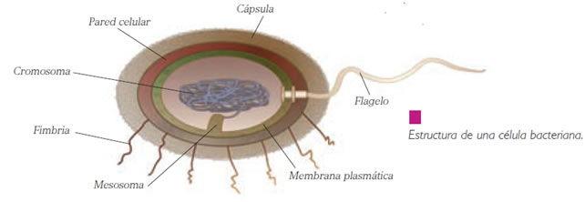organismos_patogenos_2.jpg (642×222)