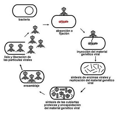 organismos_patogenos_8.jpg (400×396)