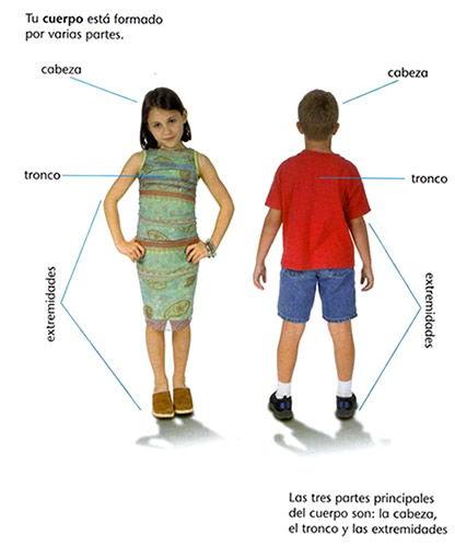 principales partes del cuerpo humano