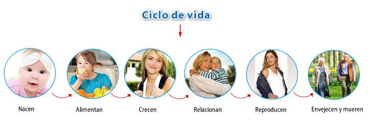 Ciclo de vida Seres vivos