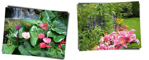 Reino vegetal - plantae