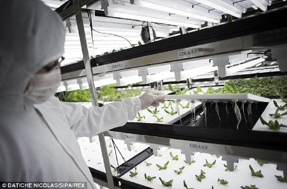 El uso de la nube en la producción de vegetales