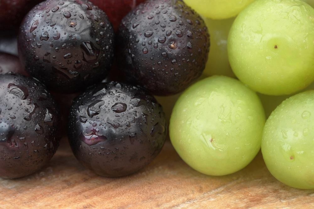 Las estadísticas de enero señalan mercados difíciles para las exportaciones chilenas de frutas frescas