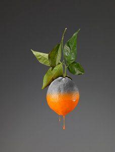 citrus-colors-1