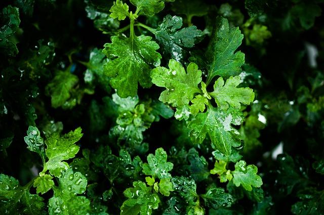 leaf-854517_640