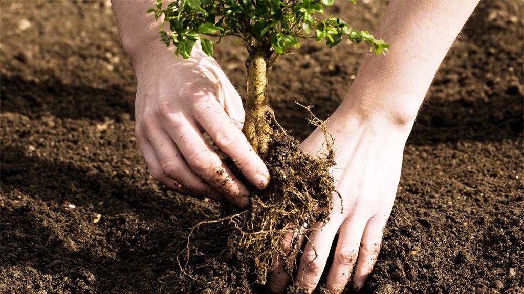 Cómo diseñar y establecer plantaciones frutícolas