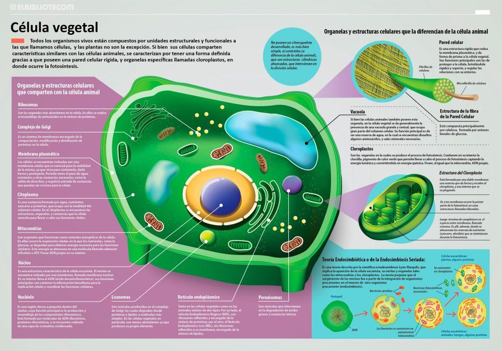 Morfología Y Fisiología De La Célula Vegetal
