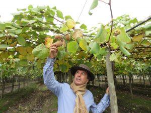 Kiwifruit - Christian Abud in the field