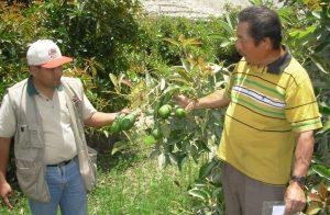 Palta- Tiruque plantaciones prensa