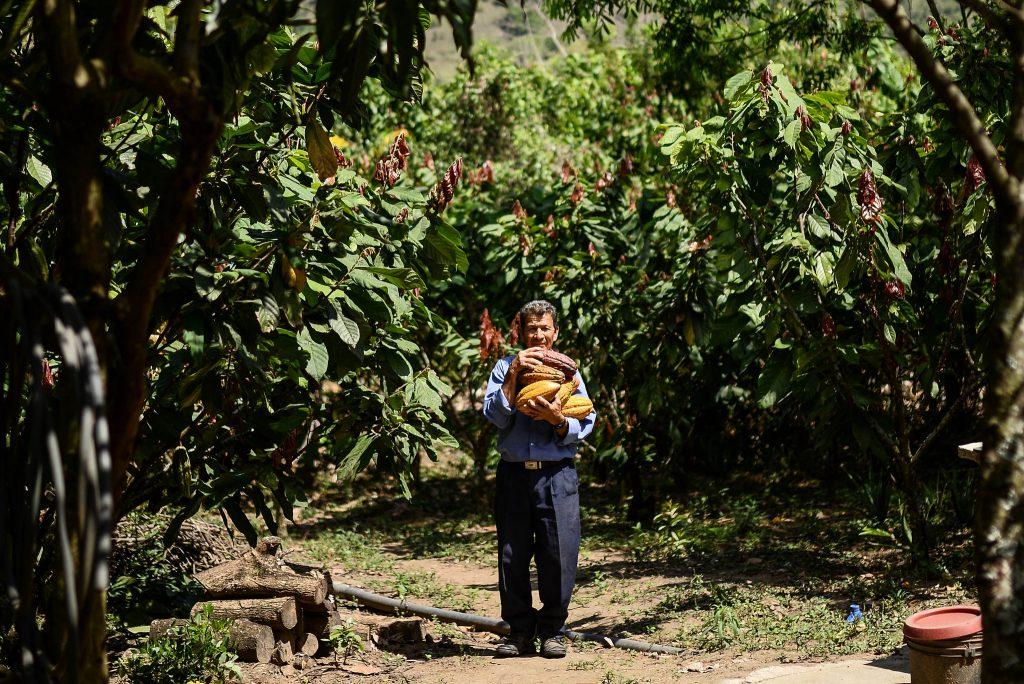 ¿Cómo Colombia ha logrado sumar 185.352 nuevas hectáreas sembradas en el primer semestre de este año?