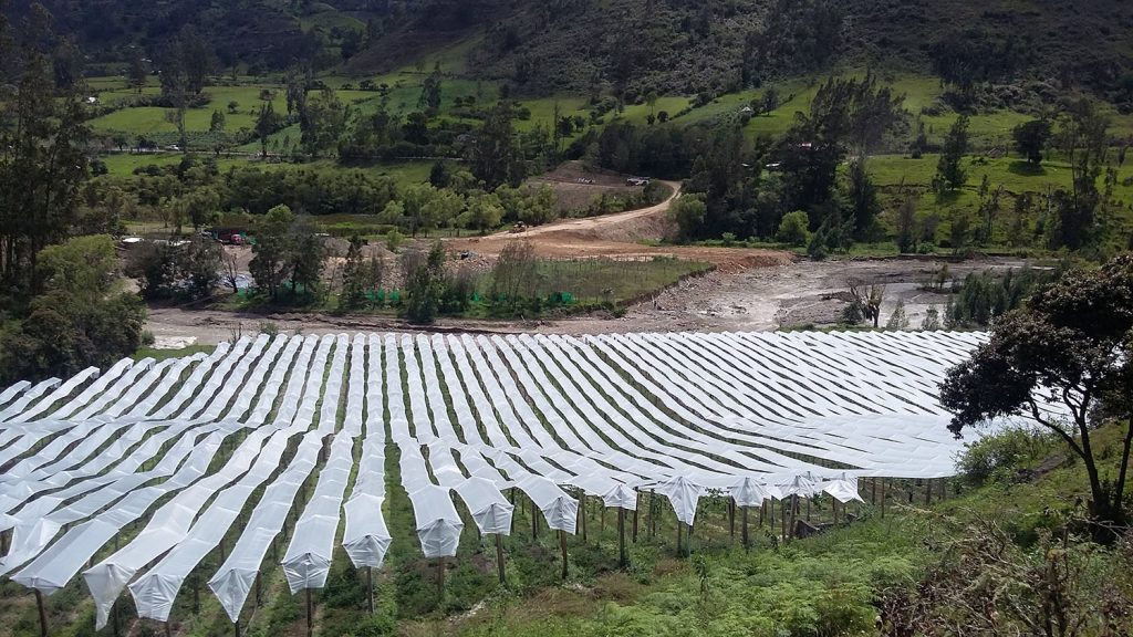 Exitoso proyecto con cobertores de plásticos en Colombia permite un mejor desarrollo de las gulupas