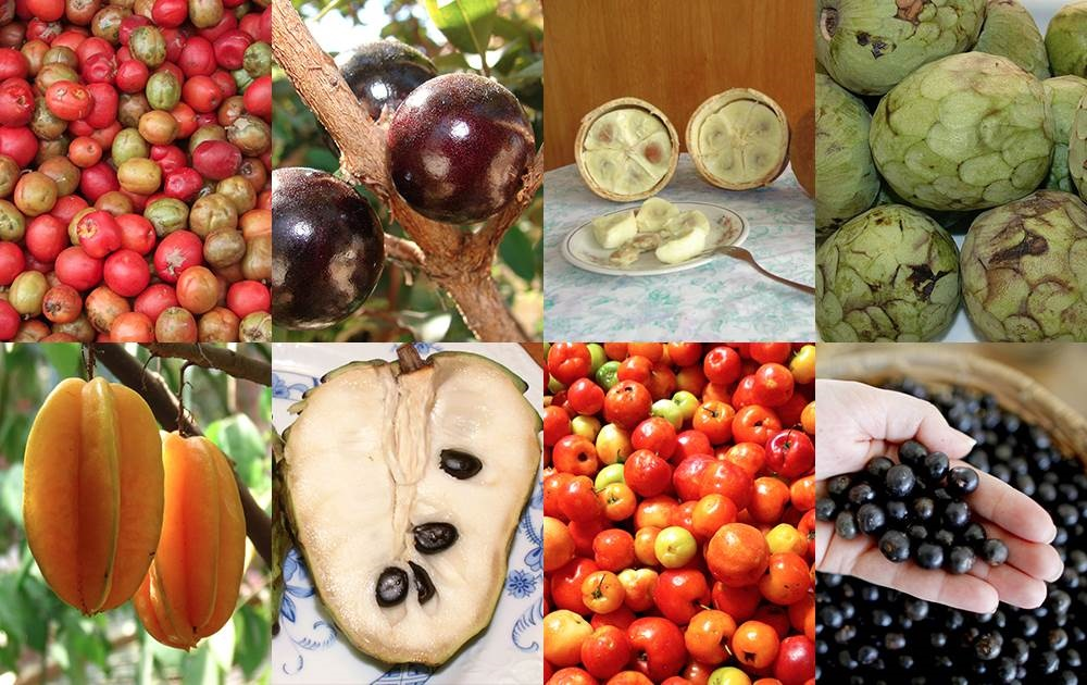 ¿Con qué frutas se alimentan los deportistas olímpicos en Brasil?