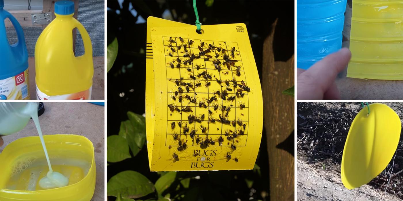 Trampas de colores para control de plagas en los cultivos. Paso a paso,  fácil, barato y efectivo. VIDEOS -