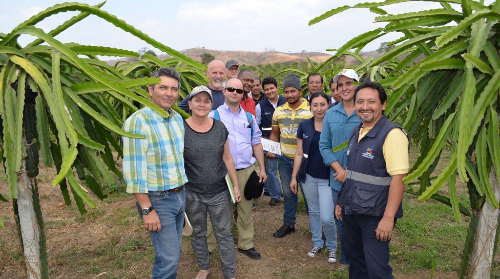 Pitahaya, frambuesas y golden berries de Ecuador en los últimos trámites para entrar a EE.UU.
