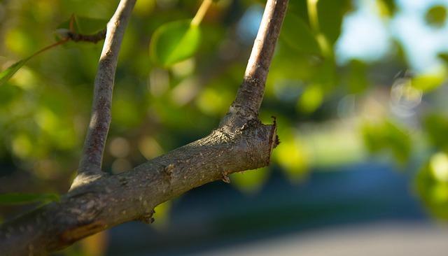 pruning-499257_640
