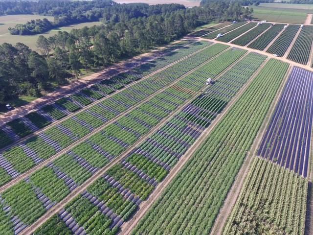 EE.UU.: El campo de pruebas de Georgia clarifica la sustentabilidad de los cultivos de Robinson Fresh