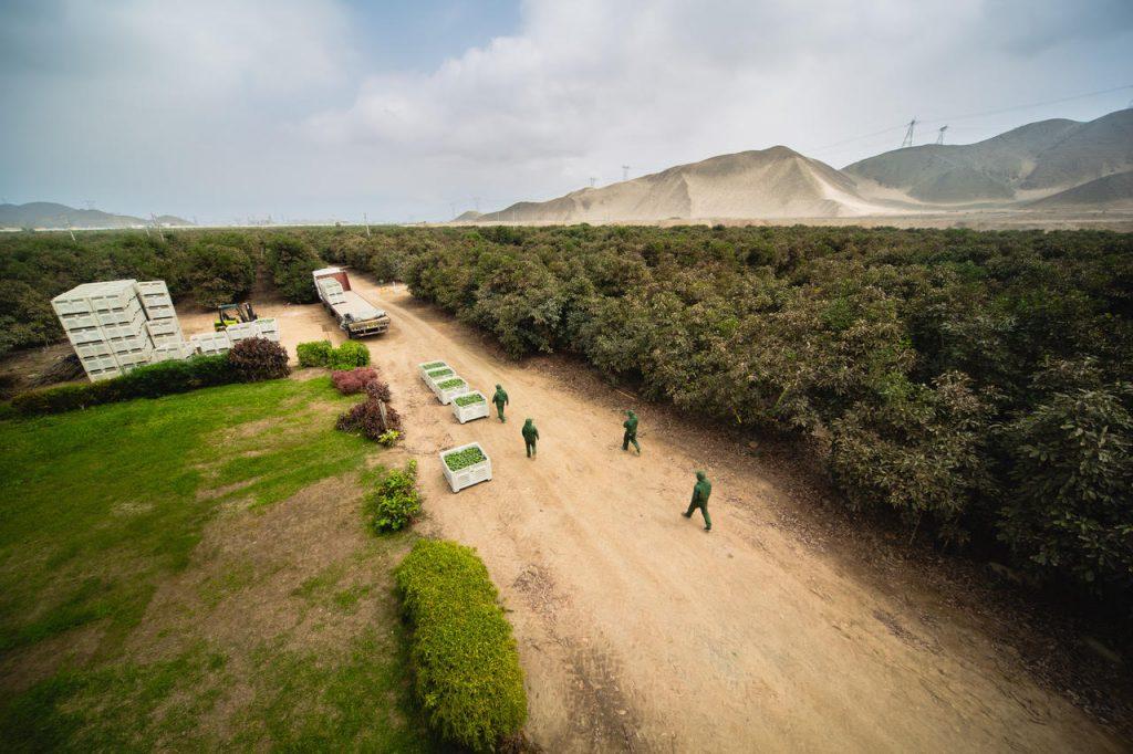 Perú: Westfalia Fruits adquiere el 51% de Camet Trading y el futuro es ambicioso