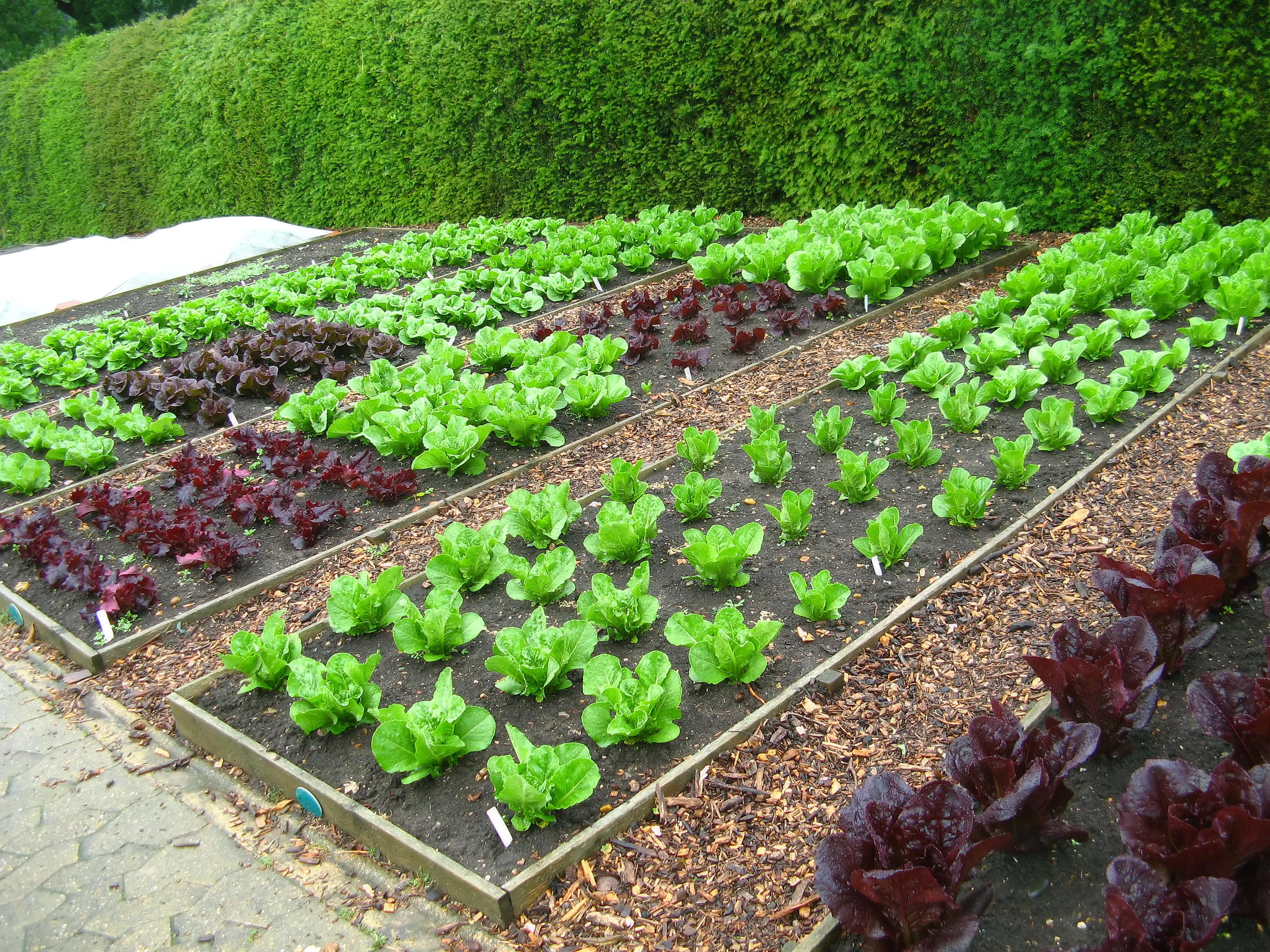 producción de hortalizas