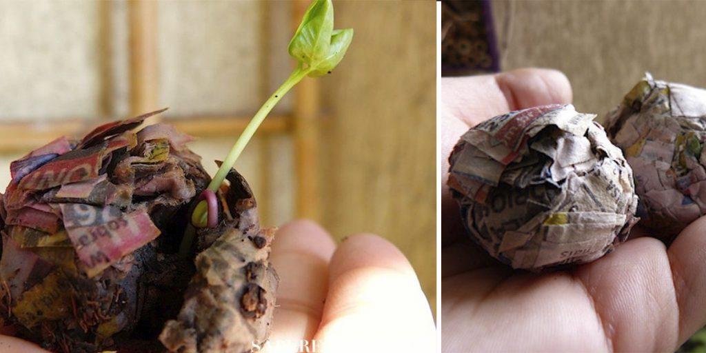 Cómo hacer bombas de semillas con periódicos