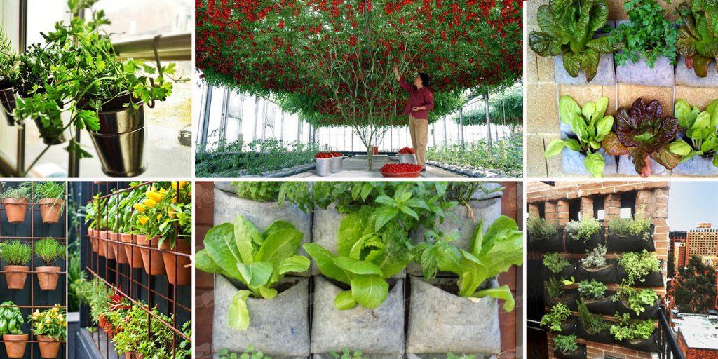 Las 10 hortalizas y plantas perfectas para utilizar en for Aprender jardineria