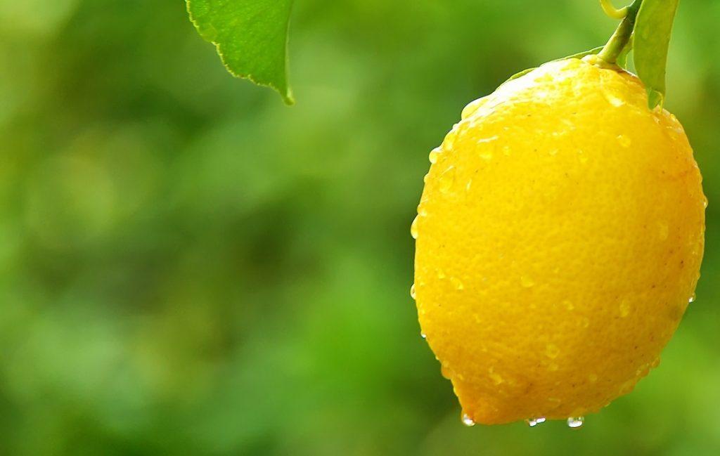 España espera mayor producción de limones para temporada 2018-19