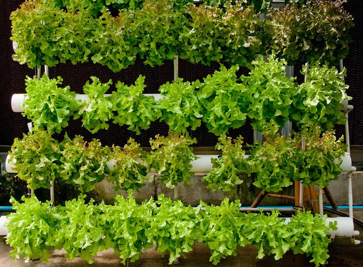 Las 10 Hortalizas Y Plantas Perfectas Para Utilizar En