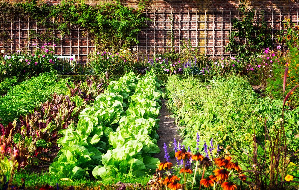 Asociaci n de cultivos en el huerto listado de for Asociacion cultivos huerto urbano