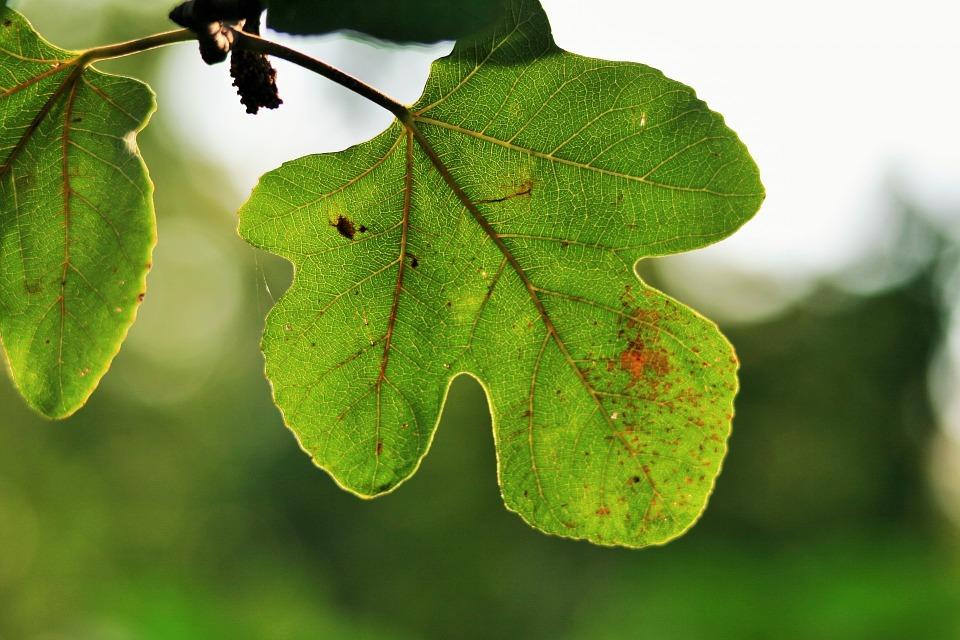 AgroA -- Vigilancia del estado nutricional de los frutales ...