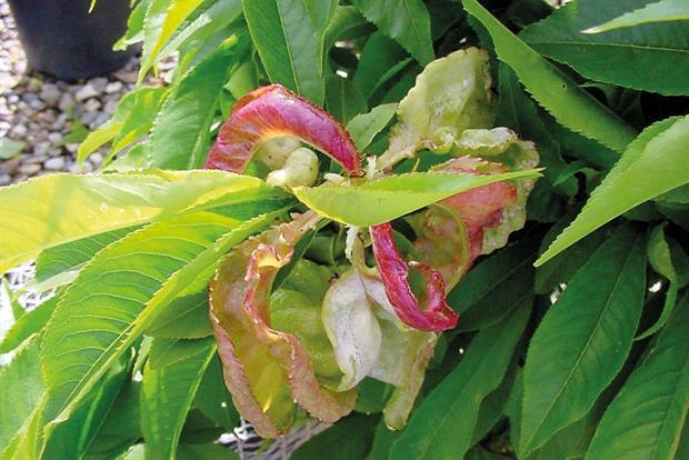Vigilancia del estado nutricional de los frutales – Análisis de ...
