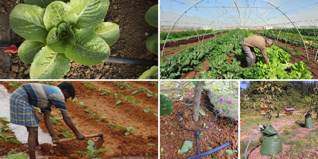 Manual de buenas prácticas de riego: Propuestas para un uso eficiente del agua en la agricultura