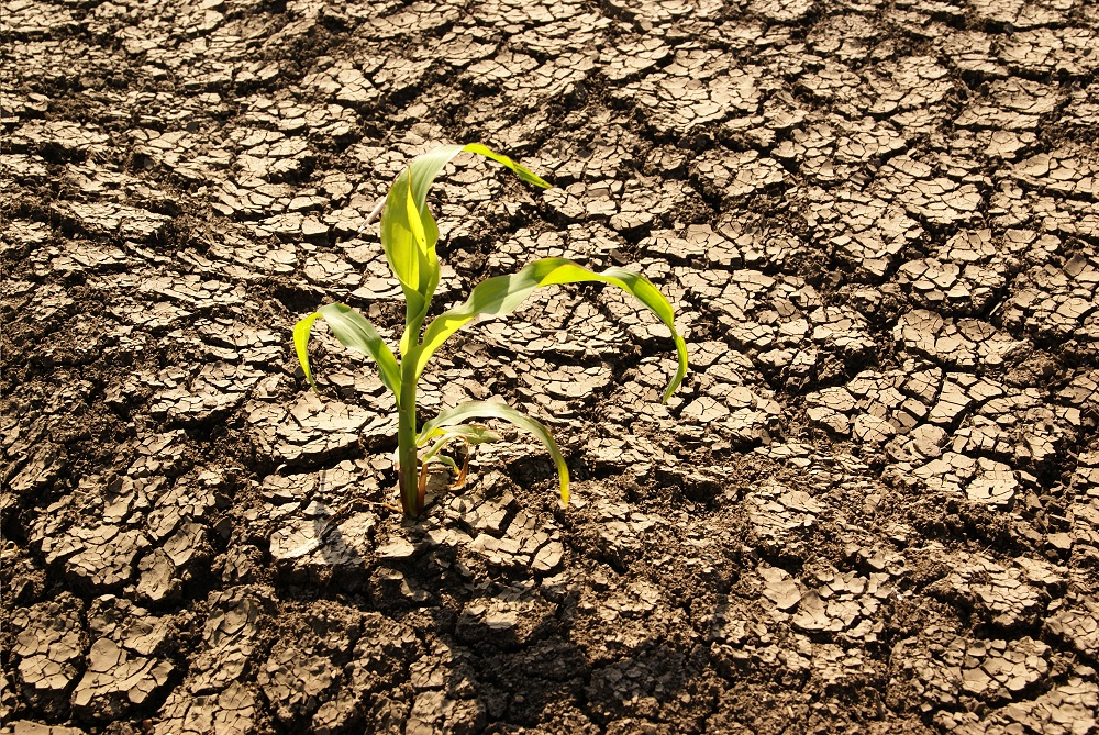 Chile: Atlas entregará información para adaptar cultivos frente al cambio climático